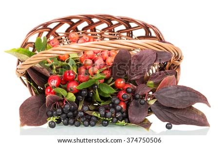 Autumn berries and leaves in a basket isolated on white background - stock photo