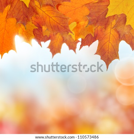 Autumn border - color maple leaves on background - stock photo