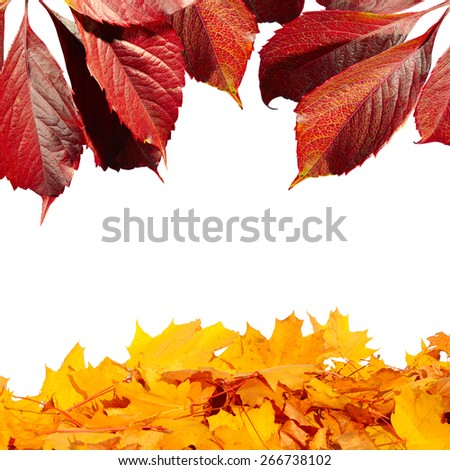 Autumn card of colored falling leafs isolated on white background - stock photo