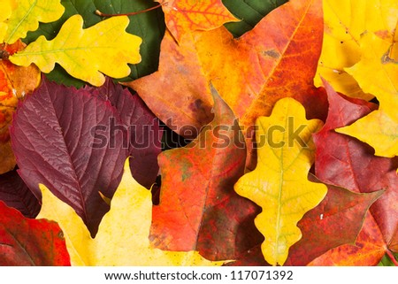 Autumn card of colored leafs over white background