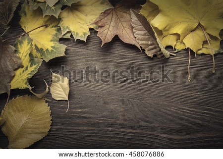 autumn classified on the tree with leaf frame for words and inscriptions, copy space, (top view)