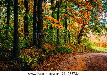 Autumn color along a dirt road in rural York County, Pennsylvania. - stock photo