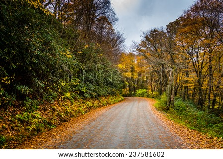 Autumn color along a dirt road near the Blue Ridge Parkway in Moses H. Cone Park, North  Carolina. - stock photo