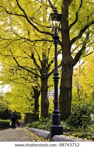 Autumn color in Yokohama, JAPAN - stock photo