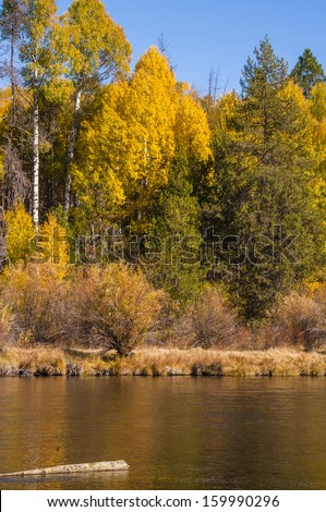 Autumn color, Oregon - stock photo