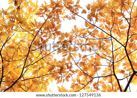 Autumn colored branches on white background