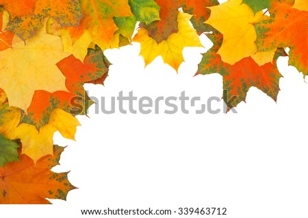 Autumn colored maple leaves falling on white background - stock photo
