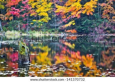 Autumn Colored Reflections in Still Pond