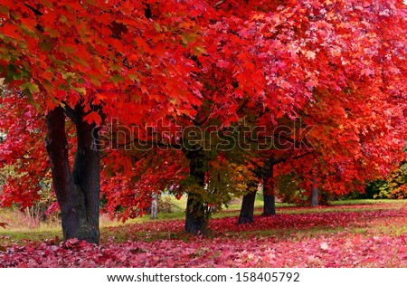Autumn colored trees - stock photo