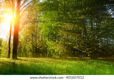 Autumn colorful landscape. Early autumn forest lit by sunset light breaking through the tree branches. Soft filter processing.  - stock photo