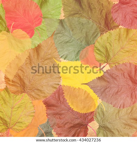 Autumn colorful leaves background.  Fall tone colors image  - stock photo