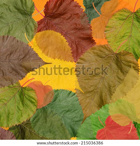 Autumn colorful leaves background. Textured old paper autumn leaves background. - stock photo