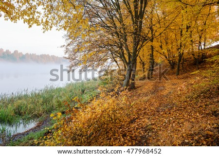 Autumn colors by the lake. Foggy morning. Poland.