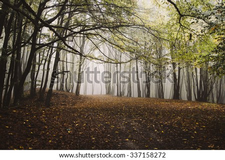 autumn colors in foggy forest with path - stock photo