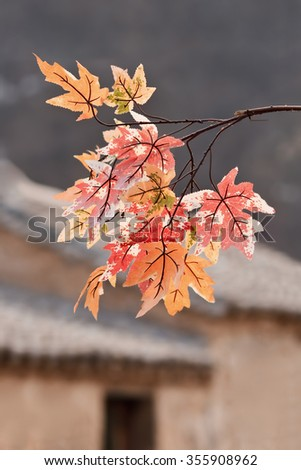 Autumn colors leaves with ancient hutongs on the background, Beijing, China - stock photo