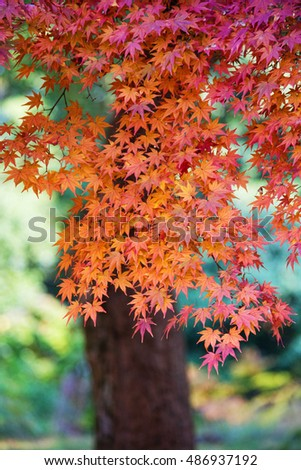 Autumn colors with blur-background #4