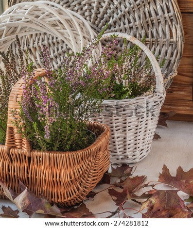 Autumn composition with heather in a basket and oak leaves - stock photo