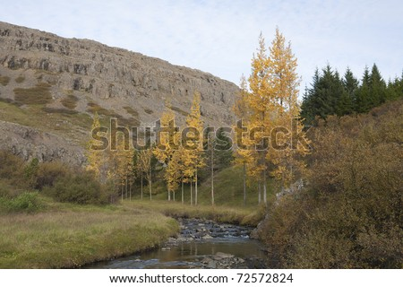 Autumn coors in Iceland - stock photo