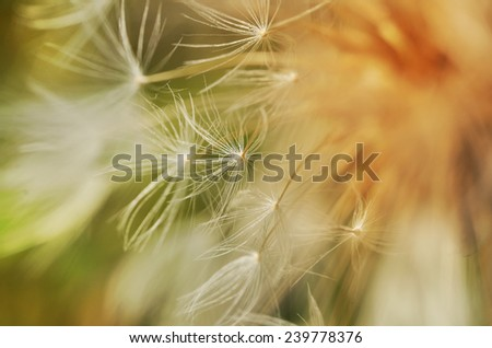 Autumn dandelion in retro style, nature background - stock photo