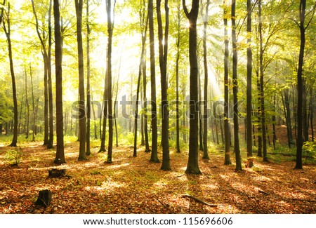 Autumn dawn in magical forest Poland - stock photo