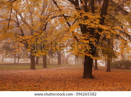 autumn day. Beautiful autumnal park in the fog. land in the foliage. Horizontal image - stock photo