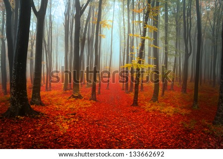 Autumn day into the forest - stock photo