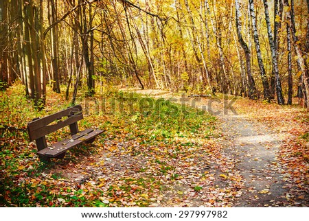 autumn deciduous forest in the park. focus on bench - stock photo