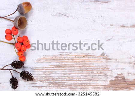 Autumn decoration and copy space for text on old rustic wooden background, red rowan, acorn and alder cone
