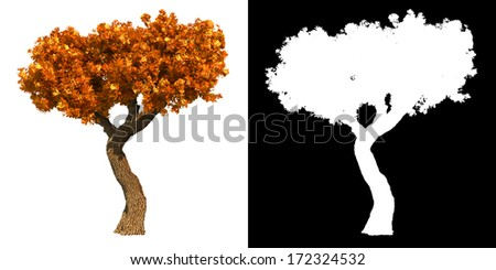 Autumn Decorative Tree Isolated on White Background.