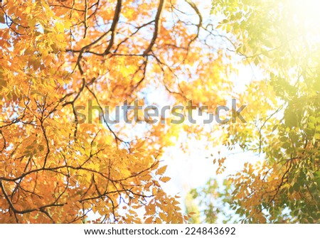 Autumn design background with colorful red and yellow leaves over blue sky. - stock photo