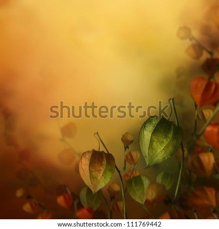 Autumn design. Border floral background with lantern flowers in season colors. Fall decoration concept. - stock photo