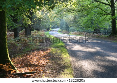 Autumn drive, New Forest, Hampshire - stock photo