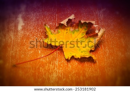 Autumn dry leaf maple in bright orange and purple background - stock photo