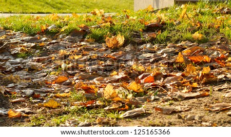 autumn dry leaves and green grass outdoors