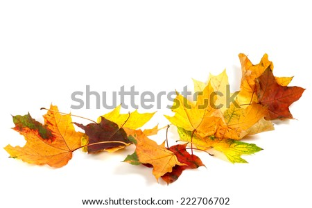 Autumn dry maple leafs isolated on white background. Autumn background with copy space. - stock photo