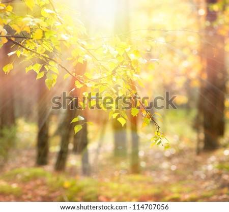 Autumn. Fall - stock photo