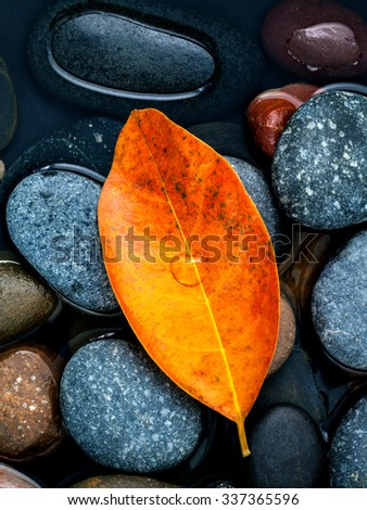 Autumn ,fall and zen like concepts orange leave fall on river stone . - stock photo