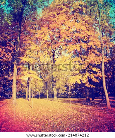 Autumn. Fall. Autumnal Park. Autumn Trees and Leaves in vintage color