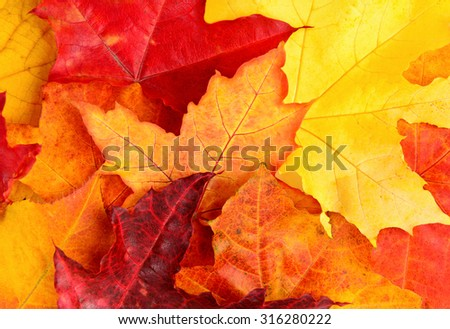 Autumn Fall colorfull leaves background - stock photo