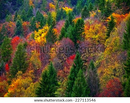Autumn Fall Forest Trees Landscape - stock photo