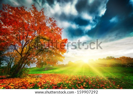 Autumn, fall landscape in park. Colorful leaves, sunny blue sky at sunset - stock photo