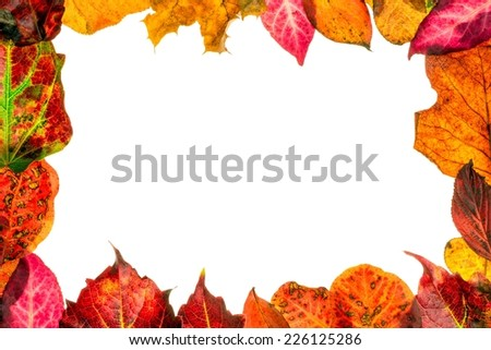 Autumn fall leaves with copy space for your text on a white background - stock photo