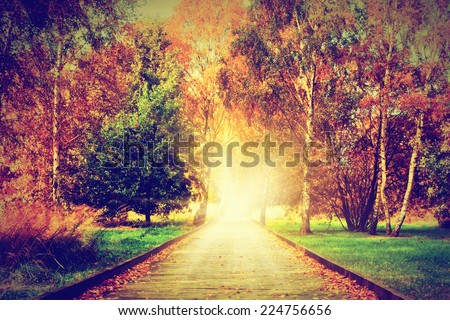 Autumn, fall park. Wooden path towards the sun. Colorful leaves, romantic aura and concepts of new life, hope, way to heaven. - stock photo