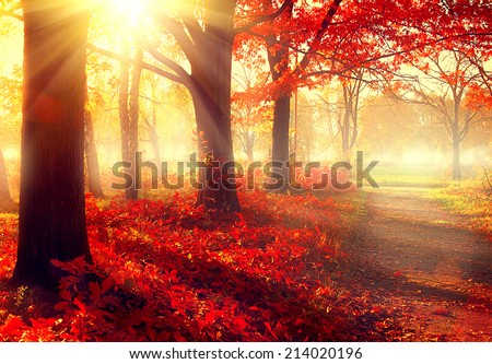 Autumn. Fall scene. Beautiful Autumnal park. Beauty nature scene. Autumn Trees and Leaves, foggy forest in Sunlight Rays  - stock photo