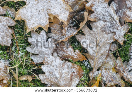 autumn fallen leaves under hoarfrost