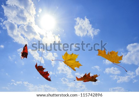 autumn falling leaves on blue sky - stock photo