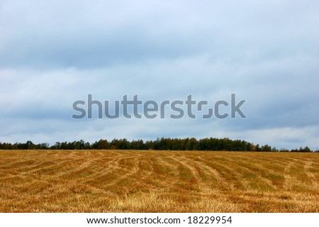 Autumn field after harvesting
