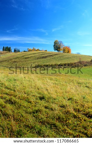 Autumn field and clear blue sky vertical composition