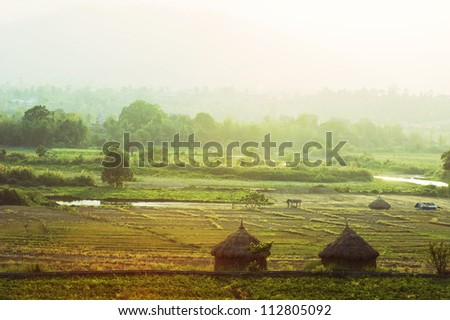 Autumn Field Asian Landscape - Pai, Thailand - stock photo