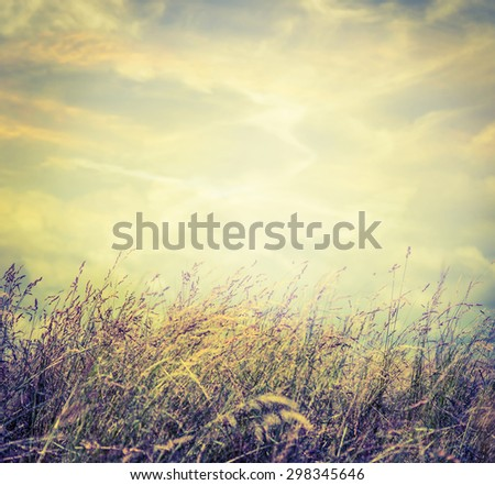 Autumn field grass on sky background, toned. - stock photo